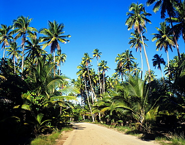 Cook Islands, Aitutaki, tranquil island road.