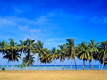 Cook Islands, Aitutaki, palm fringed west coast.