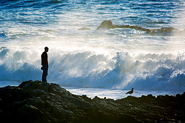 Tourist watching the ocean waves crashing on rocks at Pescadero State Beach, San Mateo County coast, California.