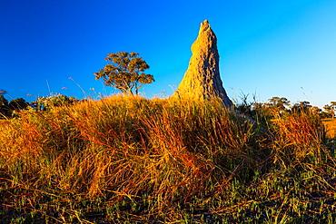 Termite mound, Okavango Delta, Botswana, Africa.