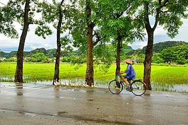 ducks and a bicyclist in the road near Ninh Binh, Vietnam.