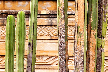 Cactus plants and Mixtecan constructions with their mosaic fretwork: Mitla Archaeological Site at Oaxaca, Mexico.