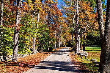Unpaved autumn road, Maceddonia Brook State Park, Kent, Connecticut, USA.
