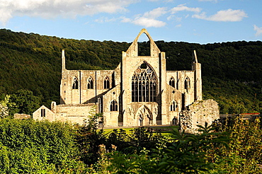 Tintern Abbey in the Wye Valley, Monmouthshire, Wales, UK. Cistercian Christian monastery founded 1131. Summer evening sunshine.