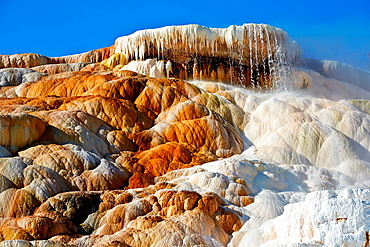 Palette Spring. Mammoth Hot Spring. Yellowstone National Park. Wyoming, USA.
