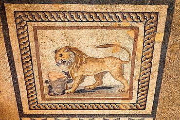 Mosaic of a lion and a bullaÄôs head on the floor of one of the terrace houses, Ephesus, Turkey.