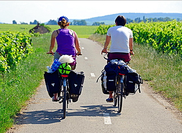 recreation in vineyard, Beaune, Cote de Beaune, Cote d'Or, Burgundy, France.