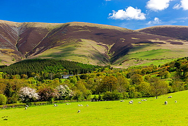 Cumbrian landscape near Keswick, Lake District National Park, Cumbria, England, UK, Europe.