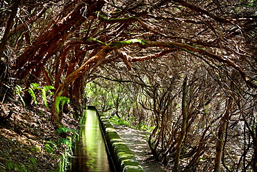 Levada das 25 Fontes, irrigation canal, Rabacal, Madeira, Portugal.
