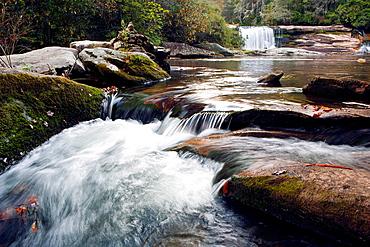 French Broad River near Living Waters, Balsam Grove, North Carolina USA.