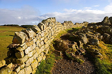 Hadrian's Wall, Cawfields, near Steel Rig, Lake District, Cumbria, UK