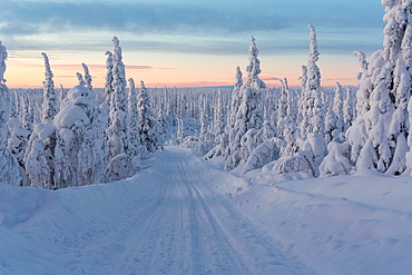 Winterlandscape with a winterroad with snowy trees in sunset in december in Gallivare, Swedish lapland, sweden, scandinavia