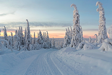 winterlandscape with a winterroad with snowy trees in sunset in december in Gallivare Swedish lapland, sweden, scandinavia.