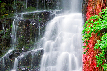 Coopey Falls, Columbia River Gorge National Scenic Area, Oregon USA.