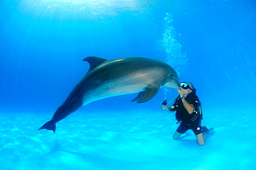 Diver and Bottlenose dolphin (Tursiops truncatus), Dolphinarium, Odessa, Odessa Oblast, Ukraine, Europe.