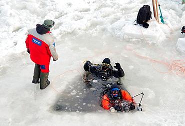 Arctic, Russia, Russian north, Kareliya, White sea. - 817-462504