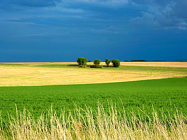 landscape with dark sky in the Argonne in France