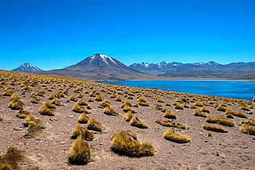 View of Miscanti volcano 5640 m (18,504 ft.) and Miscanti lagoon in the Los Flamencos National Reserve near San Pedro de Atacama in the Atacama Desert, northern Chile.