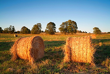 Hay bales in a farmer's field at sunset.