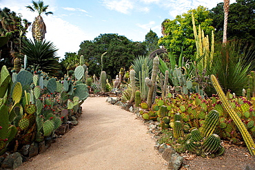 General view of path through the Arizona Cactus Garden, Stanford, California, United States of America.