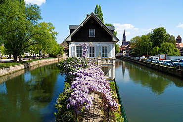House with Lilac on the River Ill in Strasbourg, France.