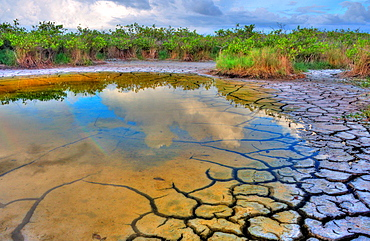 Cracked mud flat and puddle with reflection of clouds and rainbow, Florida, USA.