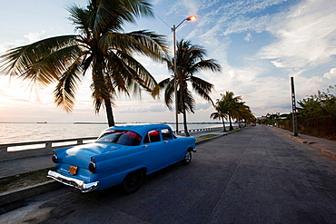 Blue american vintage car with palm trees at the Malecon, Cienfuegos, Cuba, Americas.