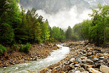 Cinca river and riparian wood with mist, Pineta valley, Ordesa and Monte Perdido National Park.