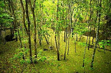 Flooded Forest, Rio Negro, Amazonia, Brazil
