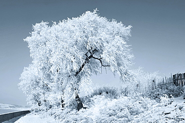 Trees covered in ice during winter, Ji Lin, China