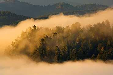 Sunrise light on coastal fog over hills near the mouth of the Klamath River, Redwood National Park, California.