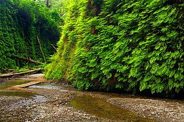 Fern Canyon, Prairie Creek Redwoods State Park, California.