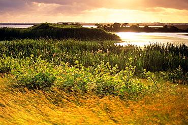 Sunset at the Arcata Marsh, Arcata, Humboldt County, CALIFORNIA.