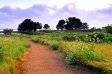 Arcata Marsh, Arcata, Humboldt County, CALIFORNIA.