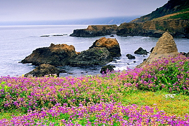 Shelter Cove, Humboldt County, CALIFORNIA.