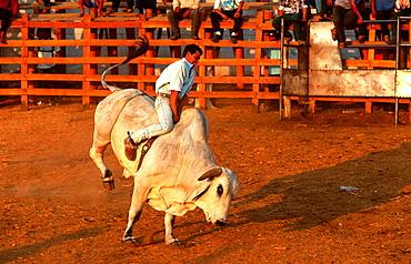 Bullfighting in Mexico.