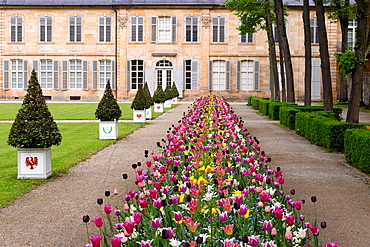 Court garden, tulips, flowers, New castle, Bayreuth, Bavaria, Oberfranken, Germany.
