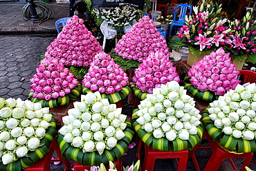 lotus flowers for sale at Psar Thmei Market, Phnom Penh, Cambodia.