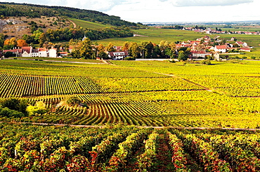 Vineyards of the Cote de Nuits, Burgundy, France