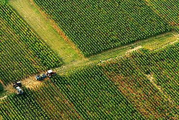 Cote de Nuits vineyards, Burgundy, France
