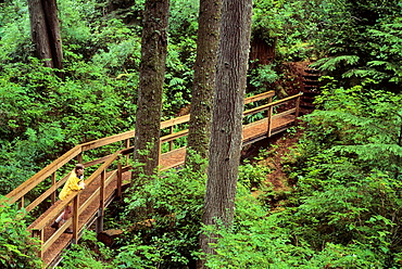 USA, Oregon, Newport, Woman on Mike Miller Educational Trail in Sitka spruce Picea sitchensis forest
