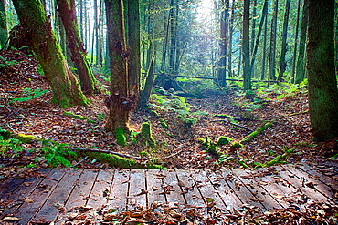 A wooden walking bridge spans a Greenway hiking trail in Buck Lake Park in Western Washington.
