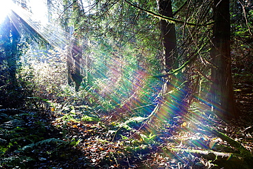 Rainbow colors stream when sunlight is divided along a hiking trail in the Greenway Trail System in Hansville, Washington.
