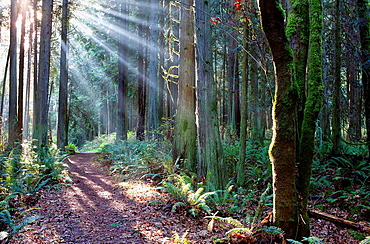 Beams of light cast light and shadows along a hiking trail in the Hansville, Washington, Greenway trail system.