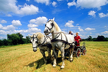 horse driving trials, Regional Natural Park of Perche, Orne department, Lower Normandy region, France, Western Europe.