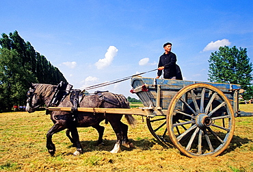 horse-drawn cart, equestrian and agricultural show, Regional Natural Park of Perche, Orne department, Lower Normandy region, France, Western Europe.