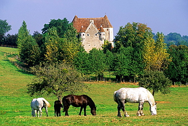 Manoir de Courboyer, Visitors Centre of the Regional Natural Park of Perche, Orne department, Lower Normandy region, France, Western Europe.
