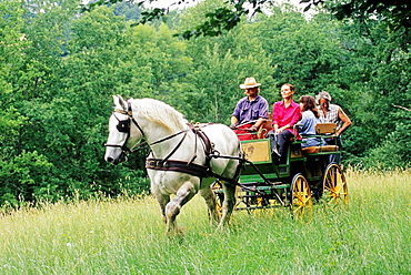 horse-drawn carriage with Percheron horse from Trait Nature family business at La Chapelle-Souef, Regional Natural Park of Perche, Orne department, Lower Normandy region, France, Western Europe.