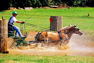 horse driving trials at Haras du Pin, Le Pin -au-Haras, Orne department, Lower Normandy region, France, Western Europe.