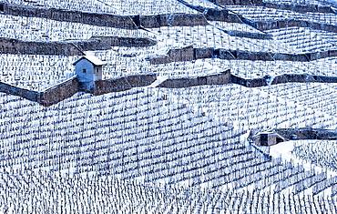 Vineyard in Lavaux, Switzerland.